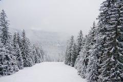 Paisaje de la montaña de la nieve del invierno en Bulgaria fotografía de archivo