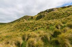 Paisaje de la montaña de la península Nueva Zelanda de Otago Foto de archivo
