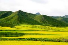 Paisaje de la montaña de Qinghai Qilian Zhuoer y flores del col Foto de archivo