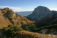 Paisaje de la montaña de Triglav NP con los alerces del otoño Fotos de archivo libres de regalías
