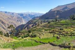 Paisaje de la montaña del barranco Cotahuasi Imagen de archivo libre de regalías