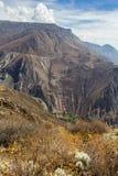 Paisaje de la montaña del barranco Cotahuasi Foto de archivo libre de regalías