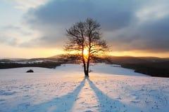 Paisaje de la montaña del invierno con el árbol en la puesta del sol Foto de archivo libre de regalías