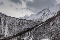 Paisaje de la montaña del invierno con el bosque del pino y del abedul Foto de archivo libre de regalías