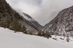 Paisaje de la montaña del invierno con el bosque del pino y del abedul Fotografía de archivo