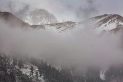 Paisaje de la montaña del invierno con el bosque del pino y del abedul Fotografía de archivo libre de regalías