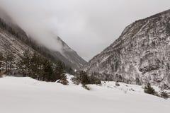 Paisaje de la montaña del invierno con el bosque del pino y del abedul Imagenes de archivo