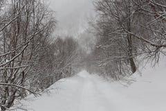 Paisaje de la montaña del invierno con el bosque del pino y del abedul Imágenes de archivo libres de regalías