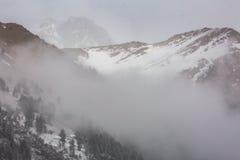 Paisaje de la montaña del invierno con el bosque del pino y del abedul Fotos de archivo