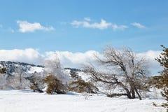 Paisaje de la montaña del invierno con la nube del cielo del árbol de pino de la nieve Imagen de archivo libre de regalías