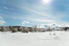 Paisaje de la montaña del invierno con la nube del cielo del árbol de pino de la nieve Fotografía de archivo libre de regalías