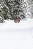 Paisaje de la montaña del invierno con nieve que cae Foto de archivo