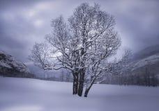 Paisaje de la montaña del invierno con un árbol Imágenes de archivo libres de regalías