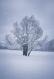 Paisaje de la montaña del invierno con un árbol Imagenes de archivo