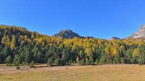 Paisaje de la montaña del otoño con bosque amarillo colorido imagenes de archivo