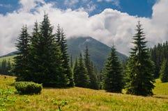 Paisaje de la montaña del verano con el abeto y la montaña cubiertos con clo imagenes de archivo
