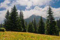 Paisaje de la montaña del verano con el abeto y la montaña cubiertos con clo imagen de archivo