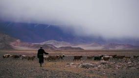 Paisaje de la montaña en el desierto Asia nómada Los animales pastan Cultivo en Mongolia almacen de metraje de vídeo
