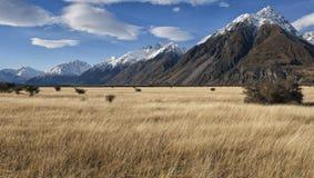 Paisaje de la montaña, Nueva Zelandia Foto de archivo
