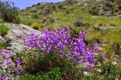 Paisaje de la montaña, wildflowers Imagen de archivo libre de regalías