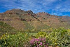 Paisaje de la montaña y de Wildflowers en primavera Fotos de archivo