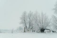 Paisaje de la naturaleza de Christmas New Year de la cerca de Forest Covered Snow White Wooden del invierno fotografía de archivo