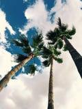 Paisaje de la naturaleza de Arizona otros Imagen de archivo libre de regalías