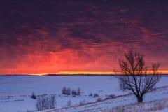 Paisaje de la naturaleza del invierno Silueta del árbol en la puesta del sol Foto de archivo