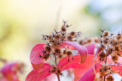 Paisaje de la naturaleza del otoño Hojas del rojo y flores secas imágenes de archivo libres de regalías