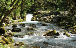 Paisaje de la naturaleza, hurst del agua de Sunik, Eslovenia Imagen de archivo