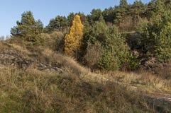 Paisaje de la naturaleza otoñal con el bosque de la mezcla y el claro seco en montaña balcánica Foto de archivo libre de regalías
