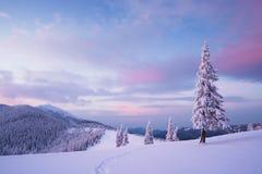 Paisaje de la Navidad con el árbol de abeto en la nieve Fotos de archivo libres de regalías