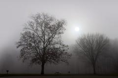 Paisaje de la niebla fotos de archivo libres de regalías