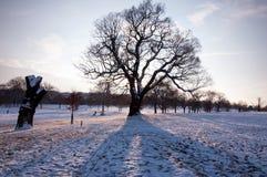 Paisaje de la nieve con el árbol Foto de archivo libre de regalías