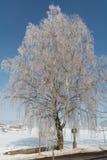 Paisaje de la nieve con el abedul en escarcha Fotografía de archivo