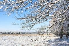 Paisaje de la nieve con un cielo azul en el Veluwe en los Países Bajos Foto de archivo