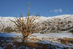 Paisaje de la nieve de Langdale Fotos de archivo