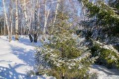 Paisaje de la nieve de maderas del invierno, Rusia Imagen de archivo