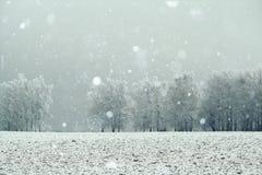 Paisaje de la nieve del invierno foto de archivo libre de regalías
