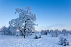 Paisaje de la nieve del invierno, altos pantanos, Bélgica Imagen de archivo