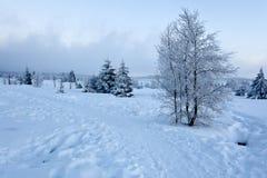 Paisaje de la nieve del invierno, altos pantanos, Bélgica Foto de archivo