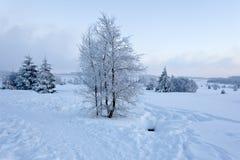 Paisaje de la nieve del invierno, altos pantanos, Bélgica Foto de archivo libre de regalías
