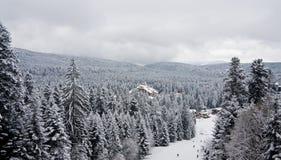 Paisaje de la nieve del invierno en nublado foto de archivo