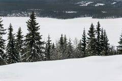 Paisaje de la nieve en árboles de pino en la colina Foto de archivo