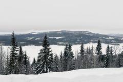 Paisaje de la nieve en árboles de pino en la colina Fotos de archivo