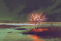Paisaje de la noche con el árbol que brilla intensamente Imagen de archivo libre de regalías