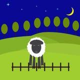Paisaje de la noche con las ovejas Fotos de archivo libres de regalías