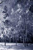 Paisaje de la noche del invierno Foto de archivo libre de regalías