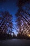 Paisaje de la noche del invierno con bosque debajo del cielo estrellado Fotografía de archivo