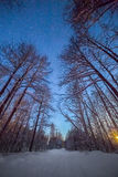 Paisaje de la noche del invierno con bosque debajo del cielo estrellado Fotos de archivo